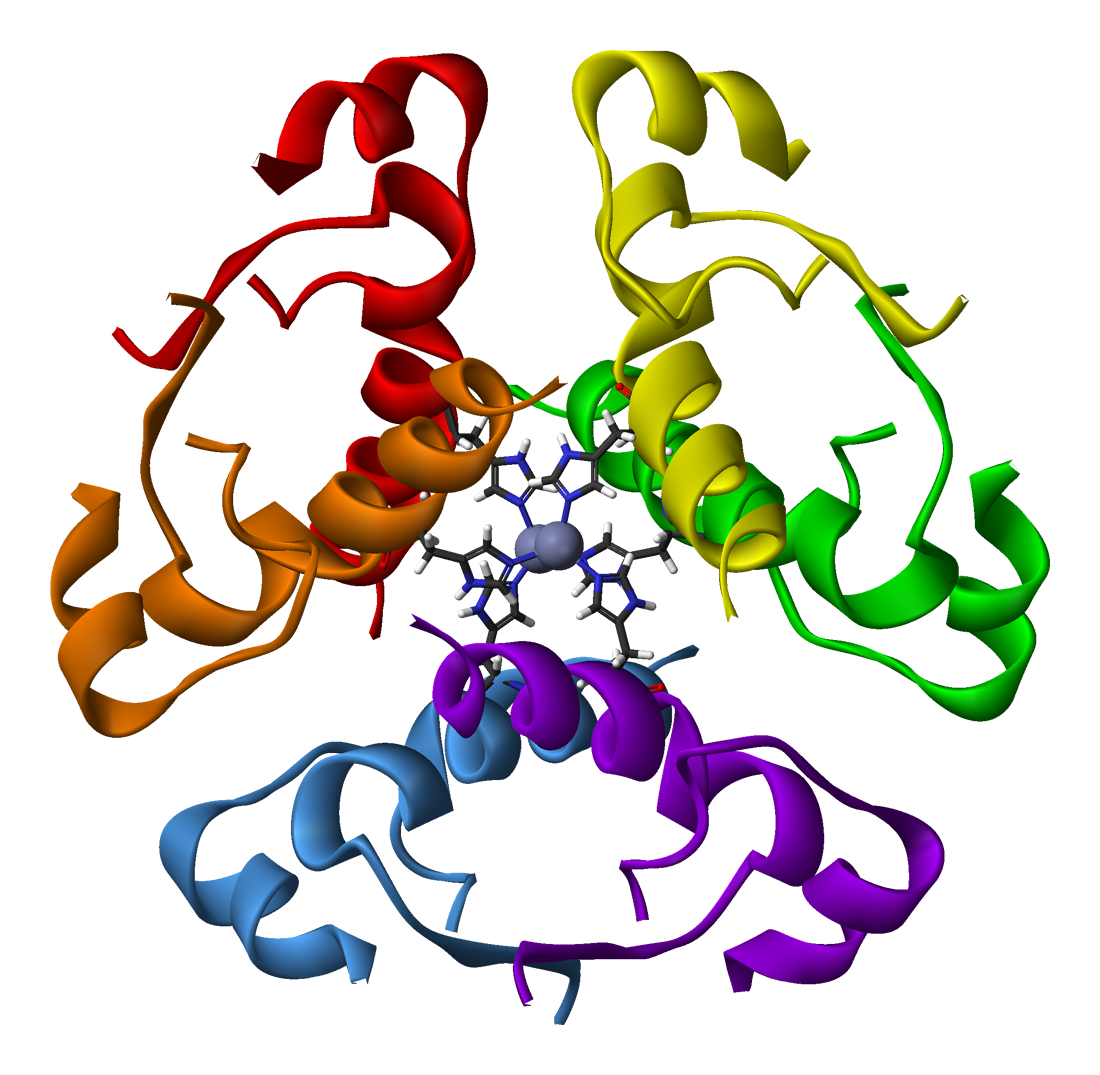 Human-insulin-hexamer-3D-ribbons